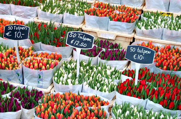 Amsterdam Flower Market Tulips