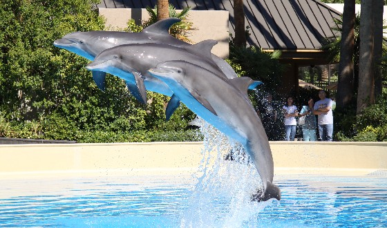 Las Vegas Mirage Dolphins jumping (www.free-city-guides.com)