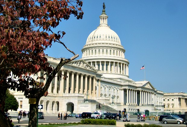 Washington US Capitol with tree