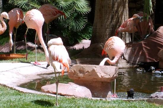 Las Vegas Flamingos