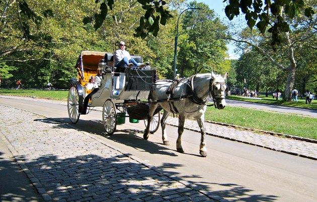 New York Central Park Horse