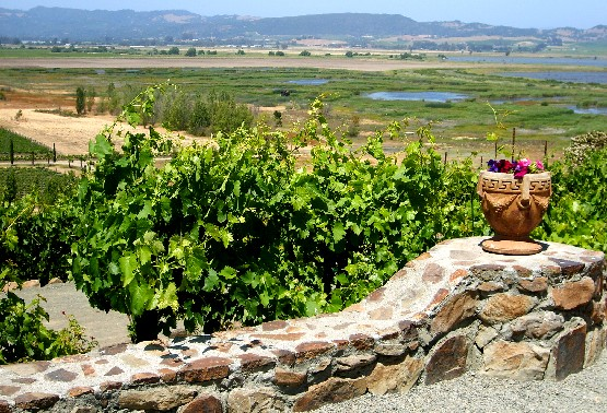 San Francisco Wine Country landscape (www.free-city-guides.com)