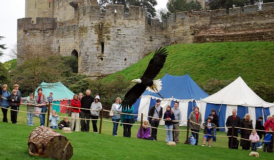 Warwick Castle Birds of Prey Show (www.free-city-guides.com)