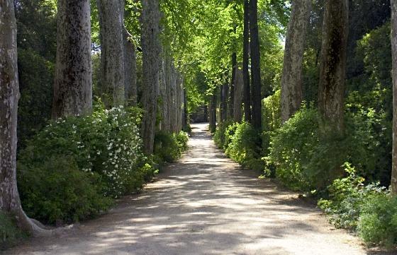 Florence Boboli Gardens walkway by Adrian Boughey