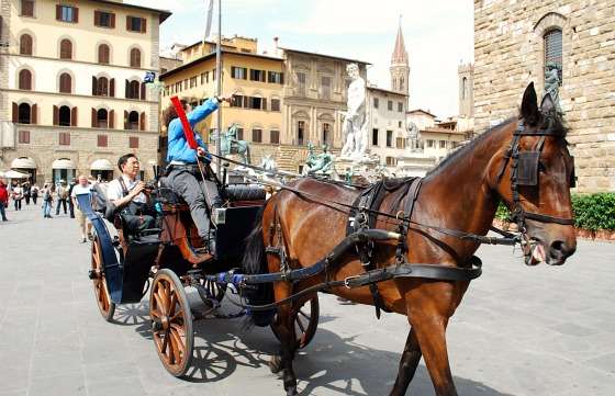 Florence piazza della signoria horse (www.free-city-guides.com)