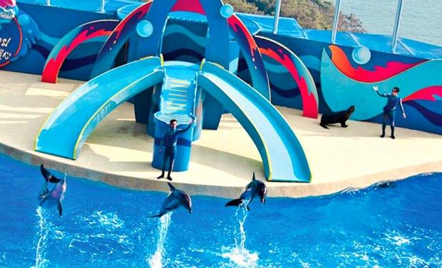 Hong Kong Ocean Park Dolphin Show