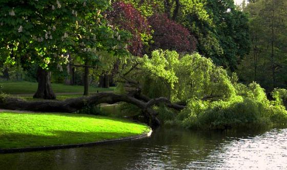 Amsterdam Vondelpark lake