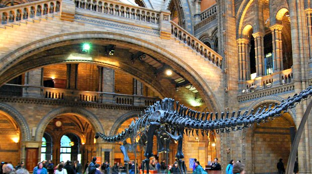 London Natural Science Museum Opening Times