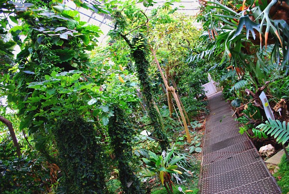Copenhagen Botanical Gardens walkway (www.free-city-guides.com)