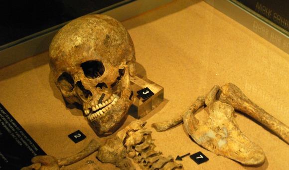 York Jorvik Skeleton (www.free-city-guides.com)