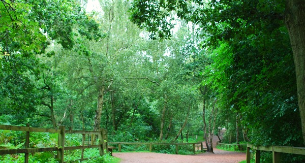 Nottingham Sherwood Forest walkway (www.free-city-guides.com)