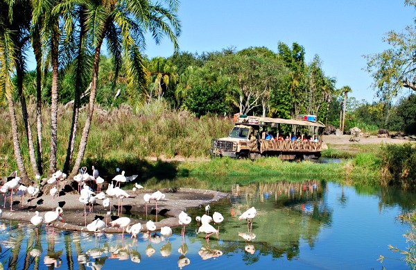 Orlando Animal Kingdom Flamingos (www.free-city-guides.com)