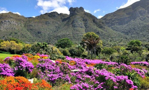 Cape Town Kirstenbosch Flower Display