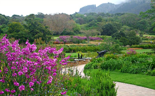 Cape Town Kirstenbosch Flowers and path