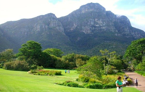Cape Town Kirstenbosch grass
