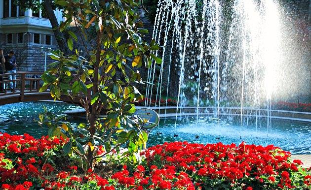 Istanbul Gulhane Park flowers