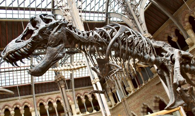 Oxford Natural History Museum Dinosaur
