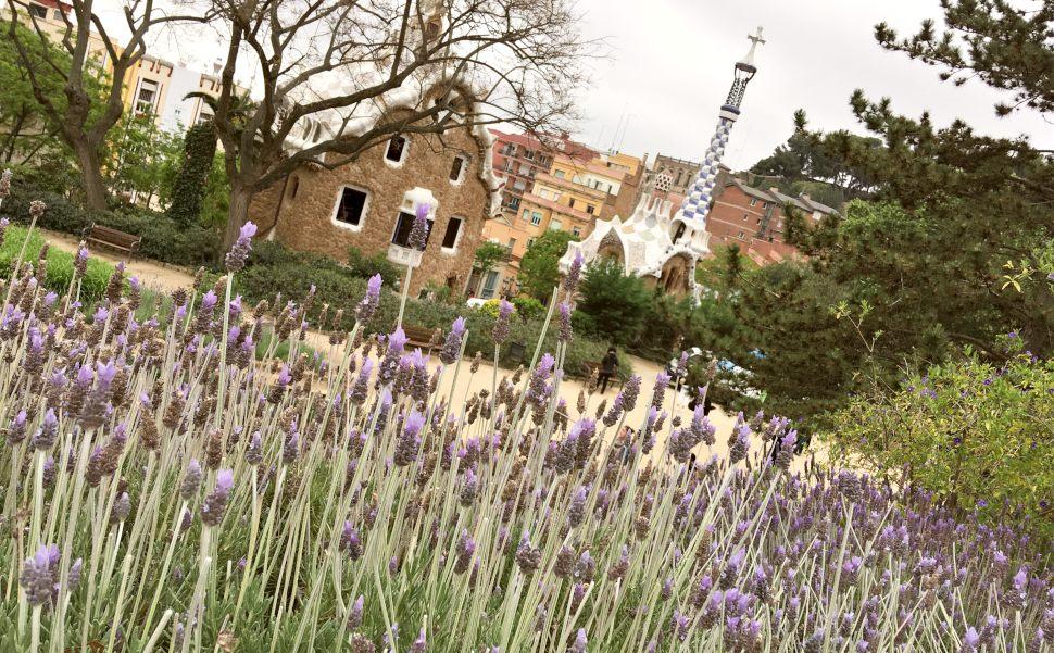 Barcelona Parc Guell lavender