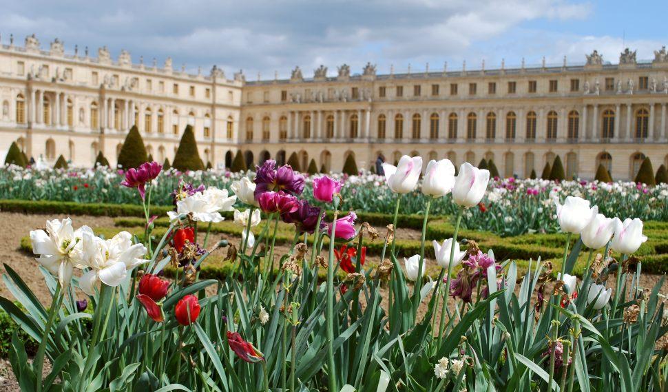 Paris Versailles Tulips New